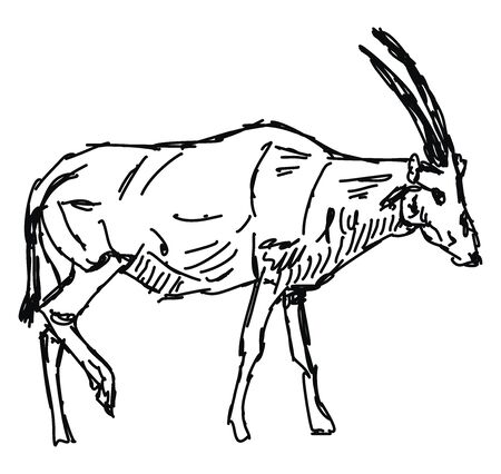 Oryx drawing, illustration, vector on white background.
