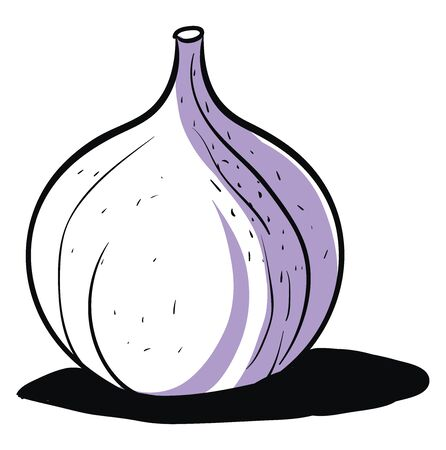 Fig drawing, illustration, vector on white background. Banque d'images - 132940965