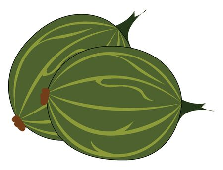 Gooseberry, illustration, vector on white background.