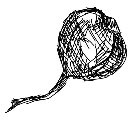 Beetroot drawing, illustration, vector on white background.