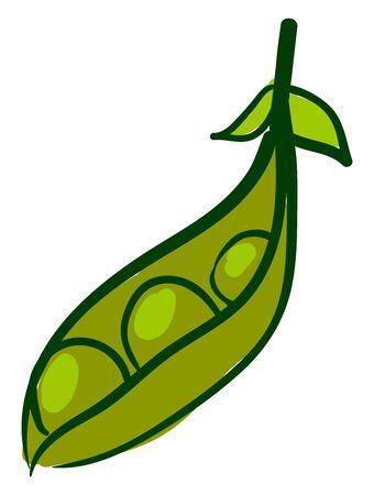 Fresh peas, illustration, vector on white background.