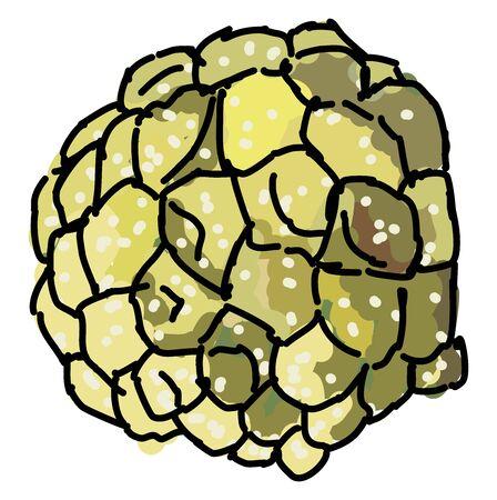 Custard apple, illustration, vector on white background.