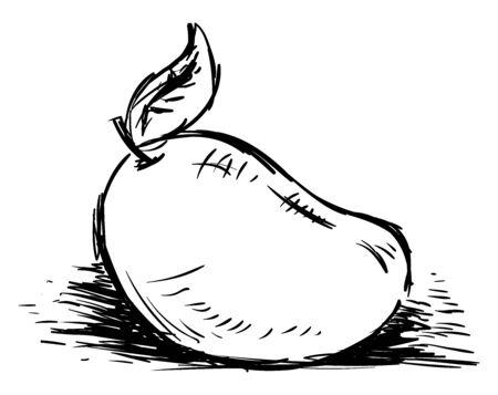 Mango sketch, illustration, vector on white background.