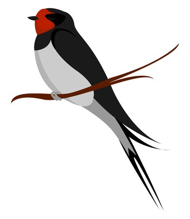 Little swallow, illustration, vector on white background.