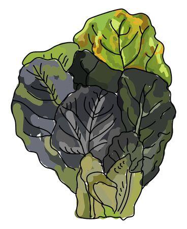 Collard greens, illustration, vector on white background. Illustration