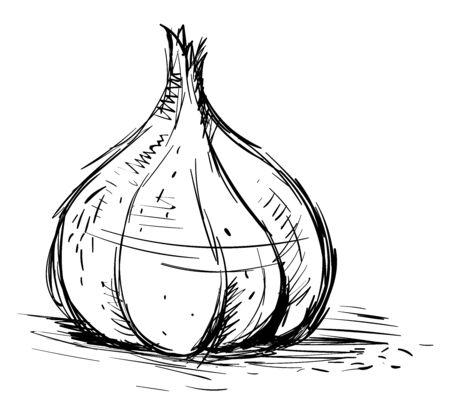 Garlic drawing, illustration, vector on white background. Illusztráció