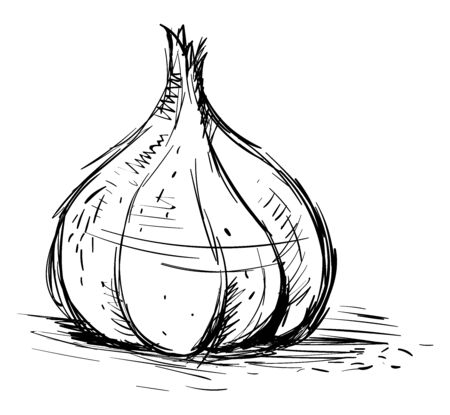Garlic drawing, illustration, vector on white background. Illustration