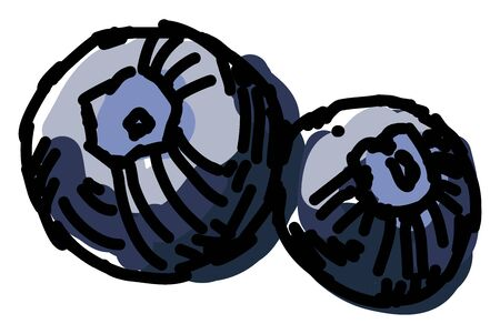 Blueberries, illustration, vector on white background.