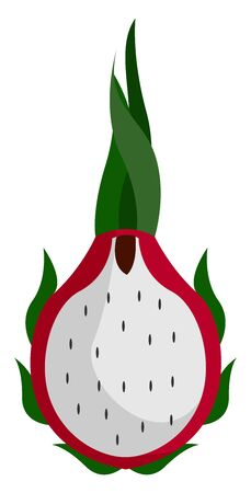 Pitahaya cactus, illustration, vector on white background.