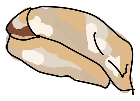 Hamachi yellowtail, illustration, vector on white background.  イラスト・ベクター素材