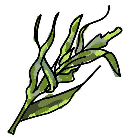 Tarragon, illustration, vector on white background.