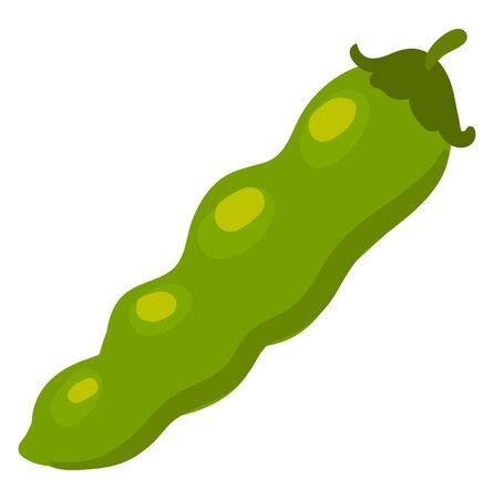 Flat beans, illustration, vector on white background.
