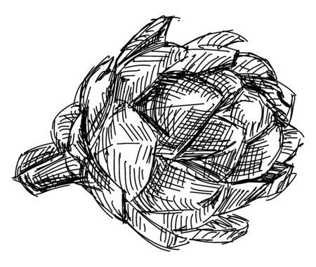 Artichoke drawing, illustration, vector on white background. 向量圖像