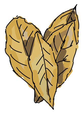 Bay leaves, illustration, vector on white background.
