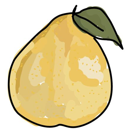 Yellow pomelo, illustration, vector on white background.