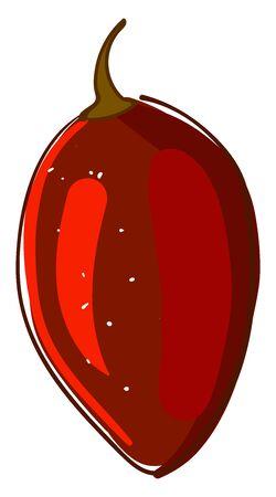 Red  tamarillo, illustration, vector on white background. Illustration
