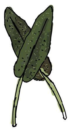 Fresh sage, illustration, vector on white background. Ilustração