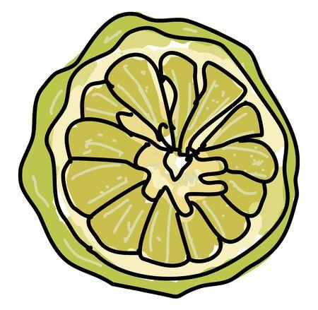 Kaffir lime, illustration, vector on white background. Vettoriali