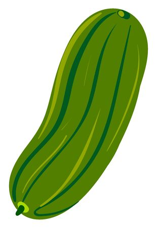 Fresh cucumber, illustration, vector on white background. Illustration
