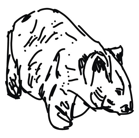 Wombat drawing, illustration, vector on white background.