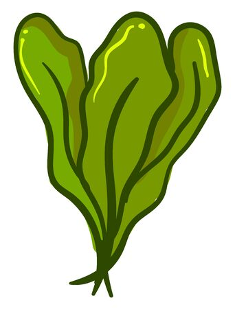Fresh spinach, illustration, vector on white background.
