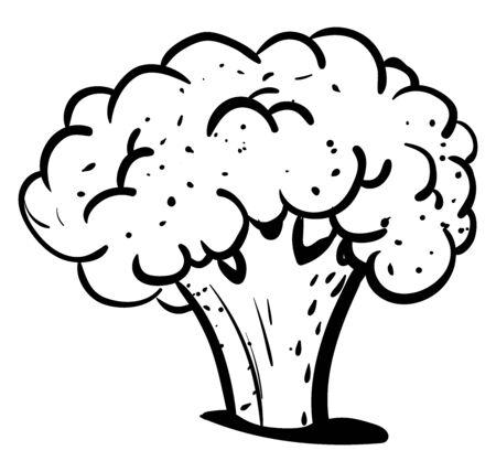Cauliflower drawing, illustration, vector on white background. 일러스트