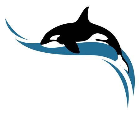 Killer whale, illustration, vector on white background. Illustration