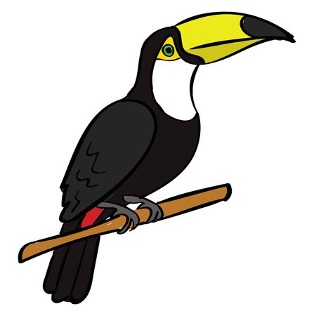 Toucan bird, illustration, vector on white background.