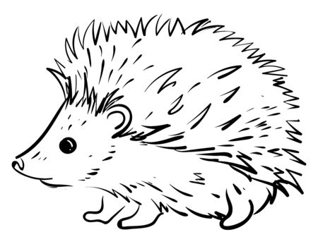 Small hedgehog, illustration, vector on white background.
