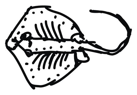 Stringray, illustration, vector on white background.