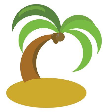 Coconut tree, illustration, vector on white background.