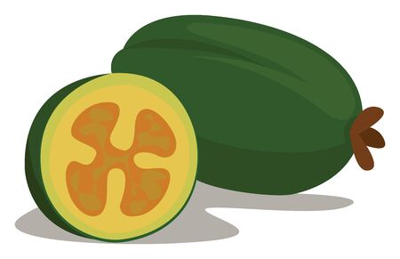 Feijoa, illustration, vector on white background.