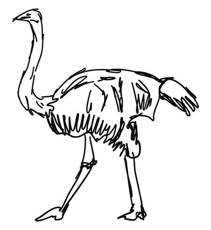 Ostrich drawing, illustration, vector on white background.