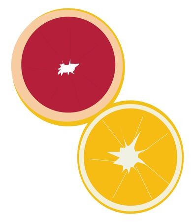 Orange and grapefruit, illustration, vector on white background.