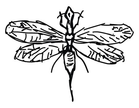 Snakefly drawing, illustration, vector on white background.