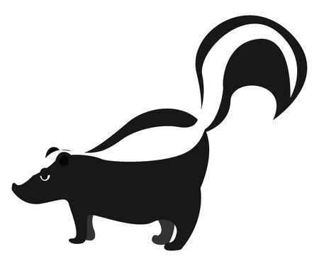 Skunk, illustration, vector on white background.