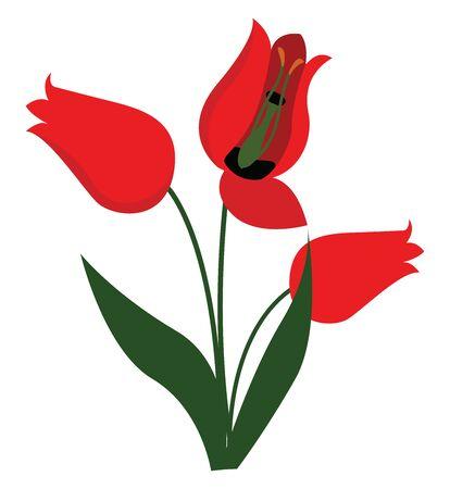 Red flower, illustration, vector on white background.