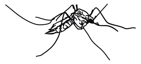 Mosquito drawing, illustration, vector on white background.
