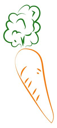 Carrot drawing, illustration, vector on white background. Ilustrace