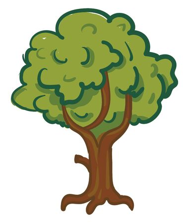 A big and shady tree, vector, color drawing or illustration.