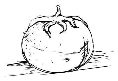 Tomato drawing, illustration, vector on white background Imagens - 132782342