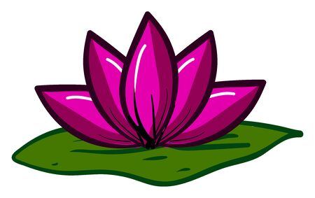 Pink lotus flower, illustration, vector on white background.