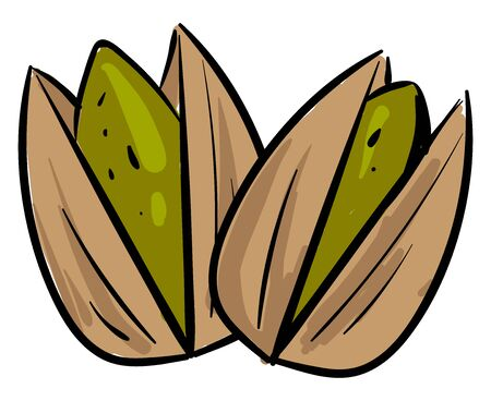 Open pistachios, illustration, vector on white background
