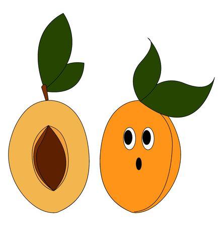 Fresh apricots, illustration, vector on white background.