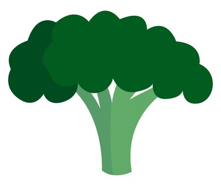 Tasty broccoli, illustration, vector on white background.