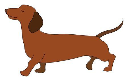 Dachshund brown dog, illustration, vector on white background.