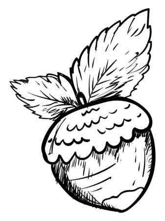 Hazelnut drawing, illustration, vector on white background 일러스트