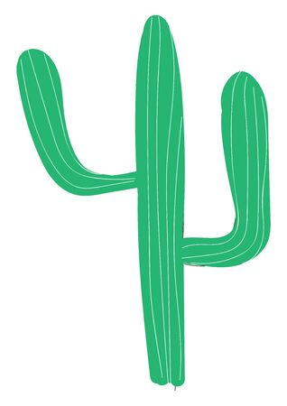A long and green cactus, vector, color drawing or illustration.