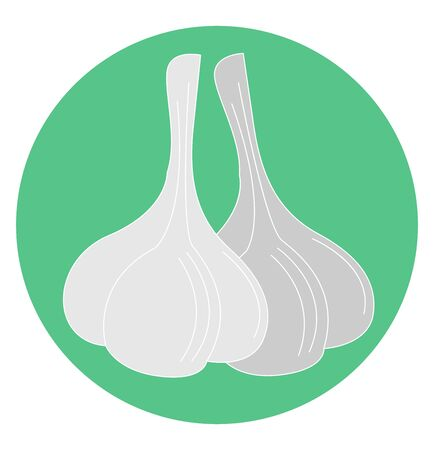 Healthy garlic, illustration, vector on white background.