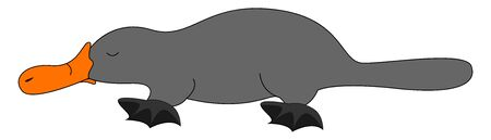 Grey platypus, illustration, vector on white background.